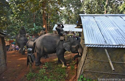 Индиската полиција користи слонови во обид да ги иселат стотици луѓе кои нелегално живеат во заштитени шумска површина