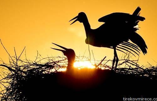 штркови на зајдисонце во Унгарија