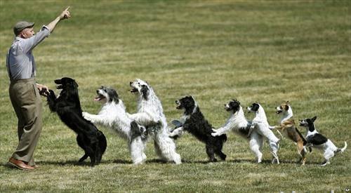 дресура на кучиња во Германија