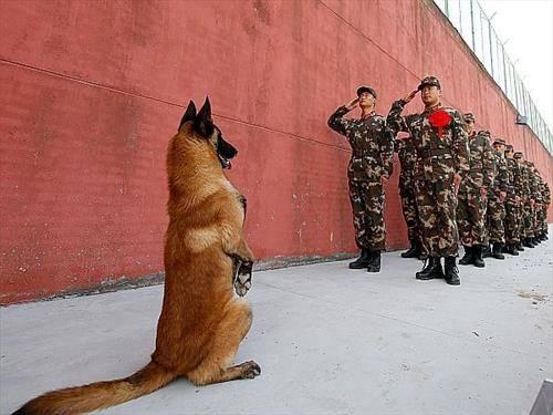 и кучето во став мирно, во киенската војска
