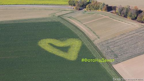 срце од жолта маслодајна репка среде зелена нива  на земјоделецот во Дирнау, во германската покраина Баден Виртемберг,