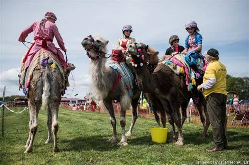 трка на камили и нивните џокеи во северна Англија