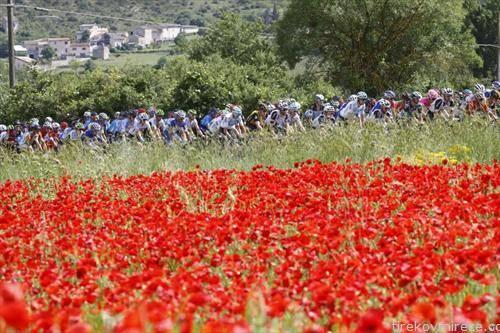 учесниците на велосипедската трка Џиро  Италија возат низ поле со булки