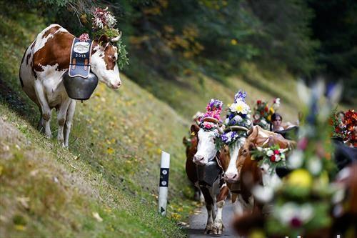 Десалпе фестивал во селото Летиваз, Швајцарија