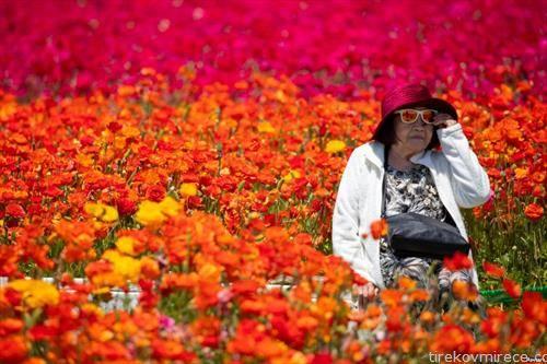 прошетка по цветна полјана во калифорнија