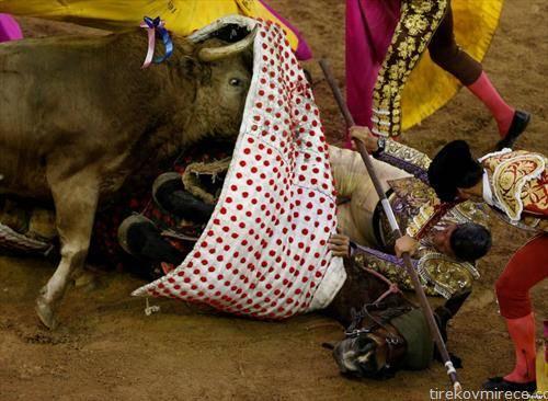 бик нападна тореадор во Кали, Колубија