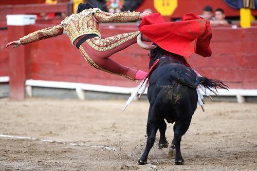Андрес Рока Реј паѓа борејќи се со бикот за време на панаѓурот за борби со бикови во Лима