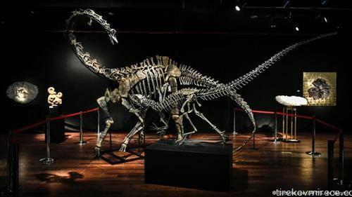 два вида диносауруси  алосаурус и диплодокус беа продадени  на јавно наддавање во француската аукциска куќа Друот во Париз за 1,4 милоини евра