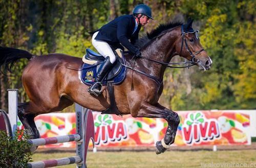 Меѓународен коњички турнир Скопје 2018- меморијален куп Д-р Јосиф Наумовски