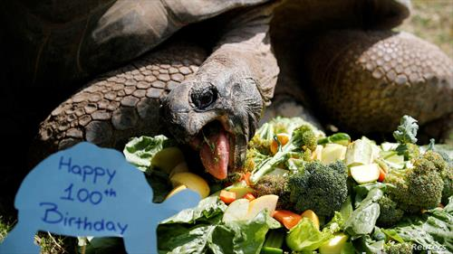со зелена салата оваа желка го славеше 100-тиот роденден