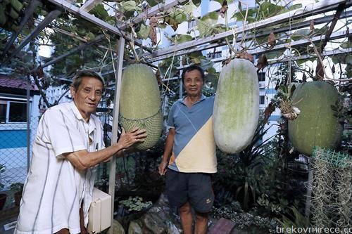 специјалитет зимски тикви тешки 30 кг во Кина