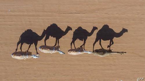 пустински карван во саудиска арабија