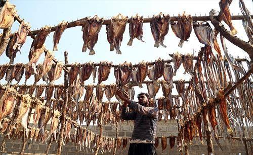 се суши риба во Пакистан