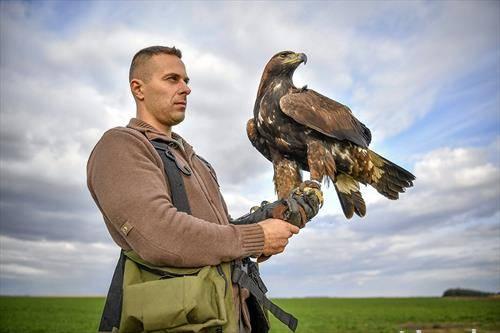 сокол обучен за лов, Шкотска