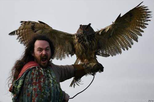 сокол ловец, во Ирска