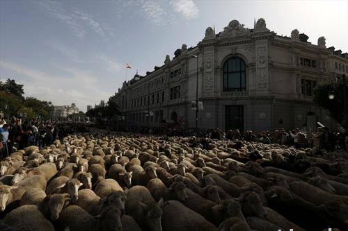 со овци на протест пред банките во Мадрид