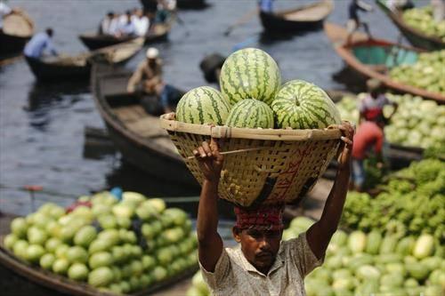 во Бангладеж во пол ек е бербата на лубениците
