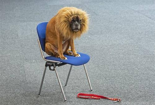 куче со изглед на лав на изложба во Германија
