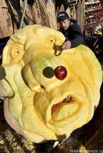 тиква тешка 560 кг во Германија, сопственикот ја декорира