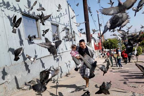 на улиците на сан франциско, птици