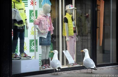 галеби по улиците на Даблин