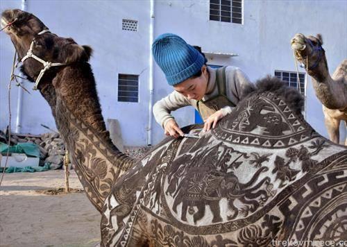 камила декорирана од нејзиниот дресер, во Индија