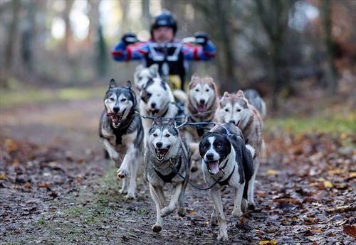 трки со кучиња во Австрија