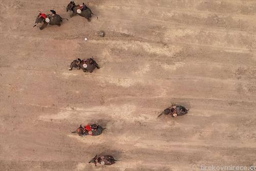 трка на слонови во Виетнам