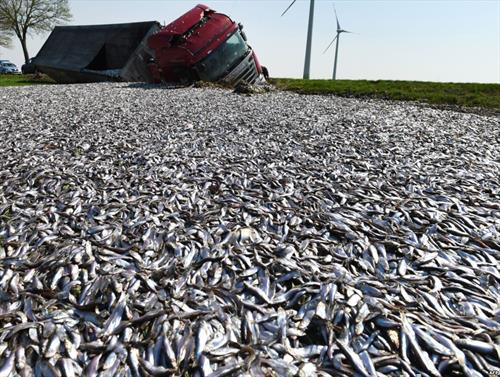 сообраќајка на камион а 20 тони риба завршија на пат